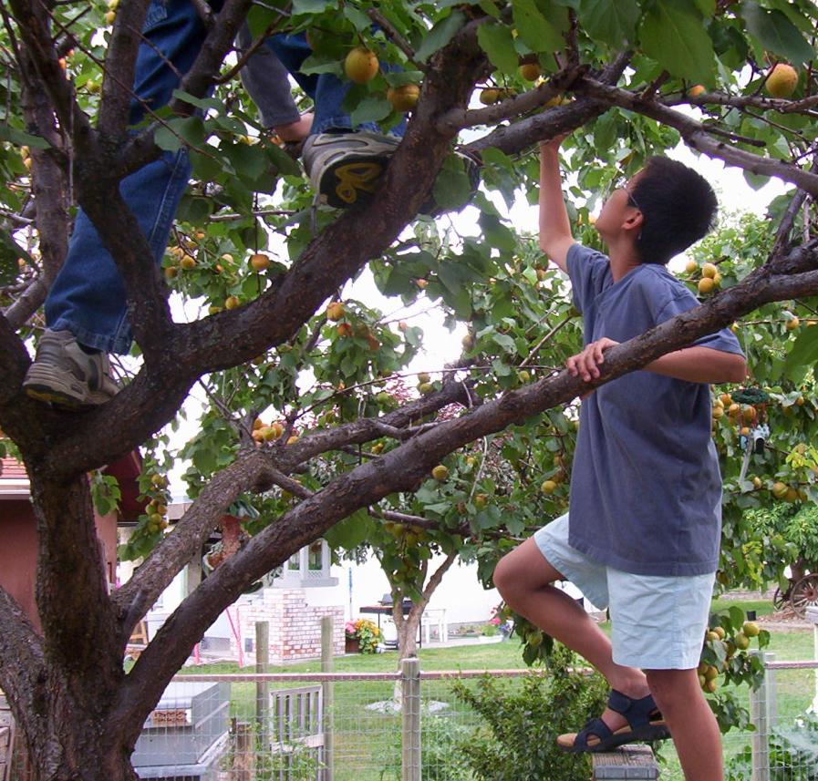 フルーツ狩